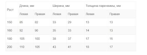 Размеры почек в норме по УЗИ у детей: таблица нормы у ребенка ...