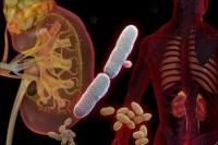 Инфекции мочевых органов