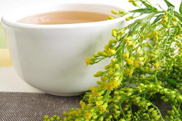 Чай от цистита из золотарника